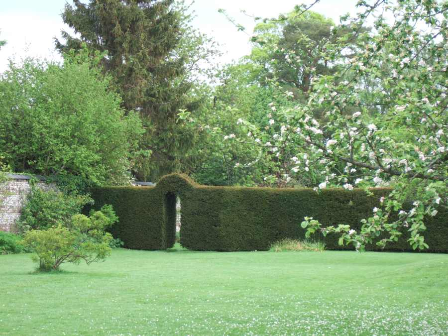 Yew hedge at Down House