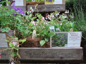 Plants from the Hairy Pot Plant Company at Down House