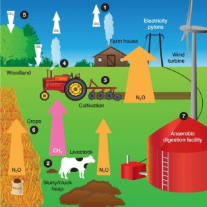 Diagram by Farming Futures of greenhouse gases from land use