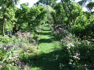 Orchard gardens - apples and columbines at Hergest Croft