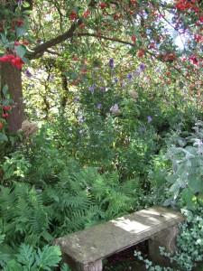 Orchard gardens - Malus hupehensis and Aconitum carmichaelii 'Kelmscott' at Wisley