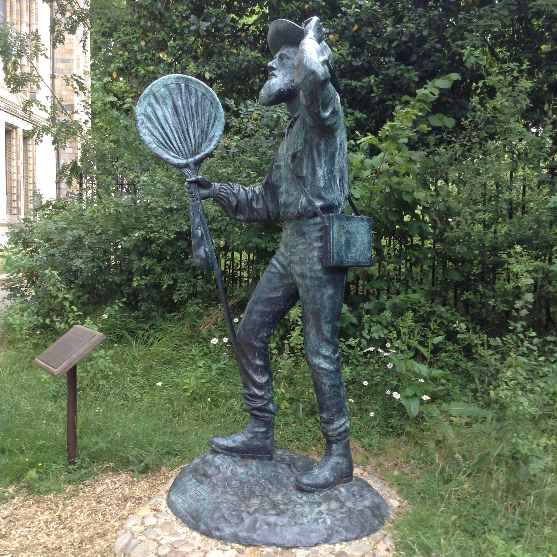 Alfred Russel Wallace in the Natural History Museum Wildlife Garden